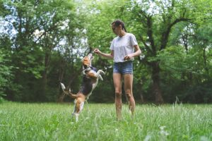 The Best Benefits of Hemp Extract for Dogs with Aktive